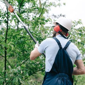 how to use a pole pruner